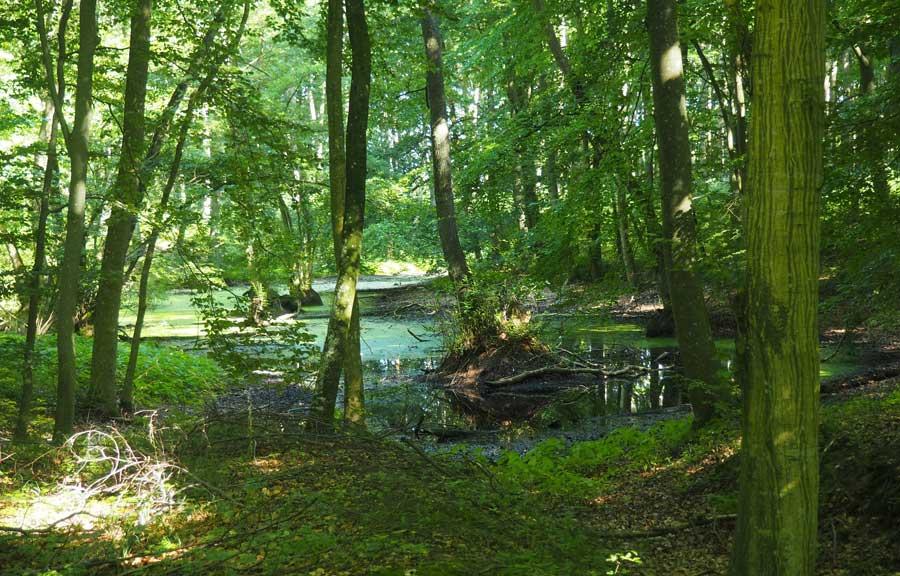 Alte Buchenwälder